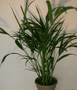 Cleanse the air in your home with pet friendly non toxic for Large non toxic house plants