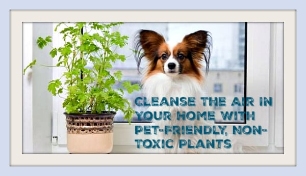cleanse the air in your home
