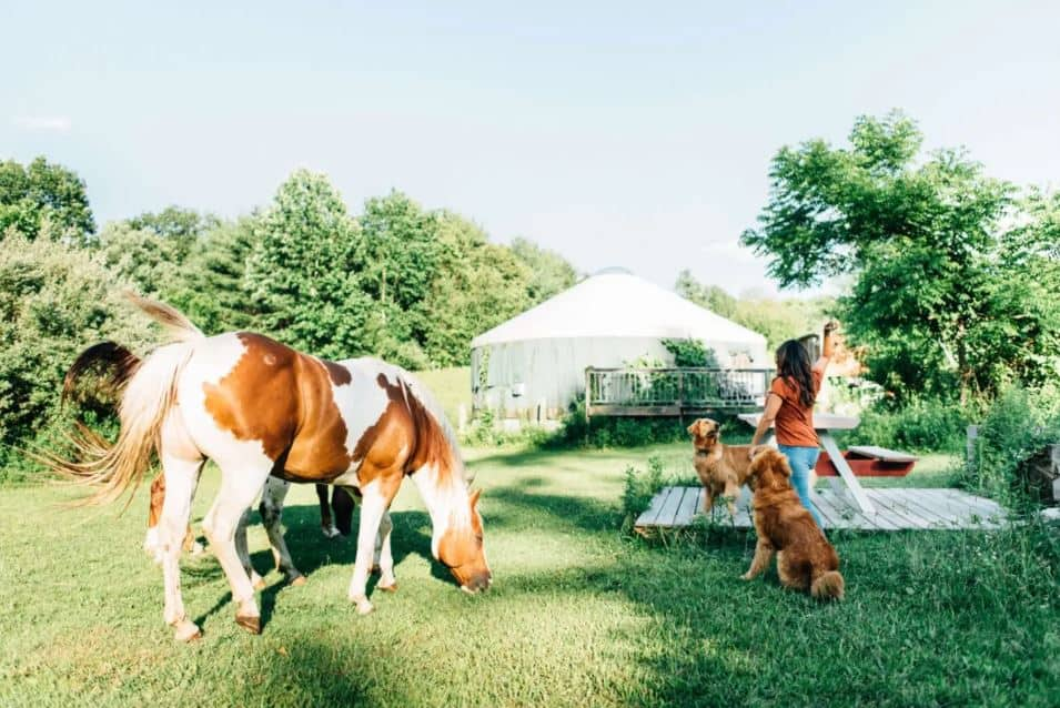 Horse farm yurt for rent on airbnb