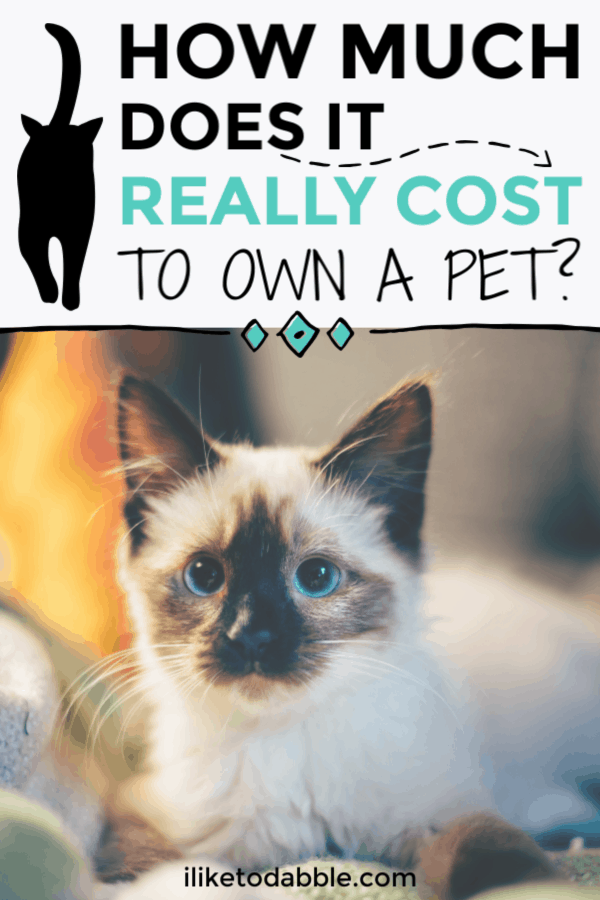 How much does it really cost to own a pet? From our own monthly pet expenses, we get pretty deep into it along with some tips for saving money on pet care. #petcare #petcosts #savemoney