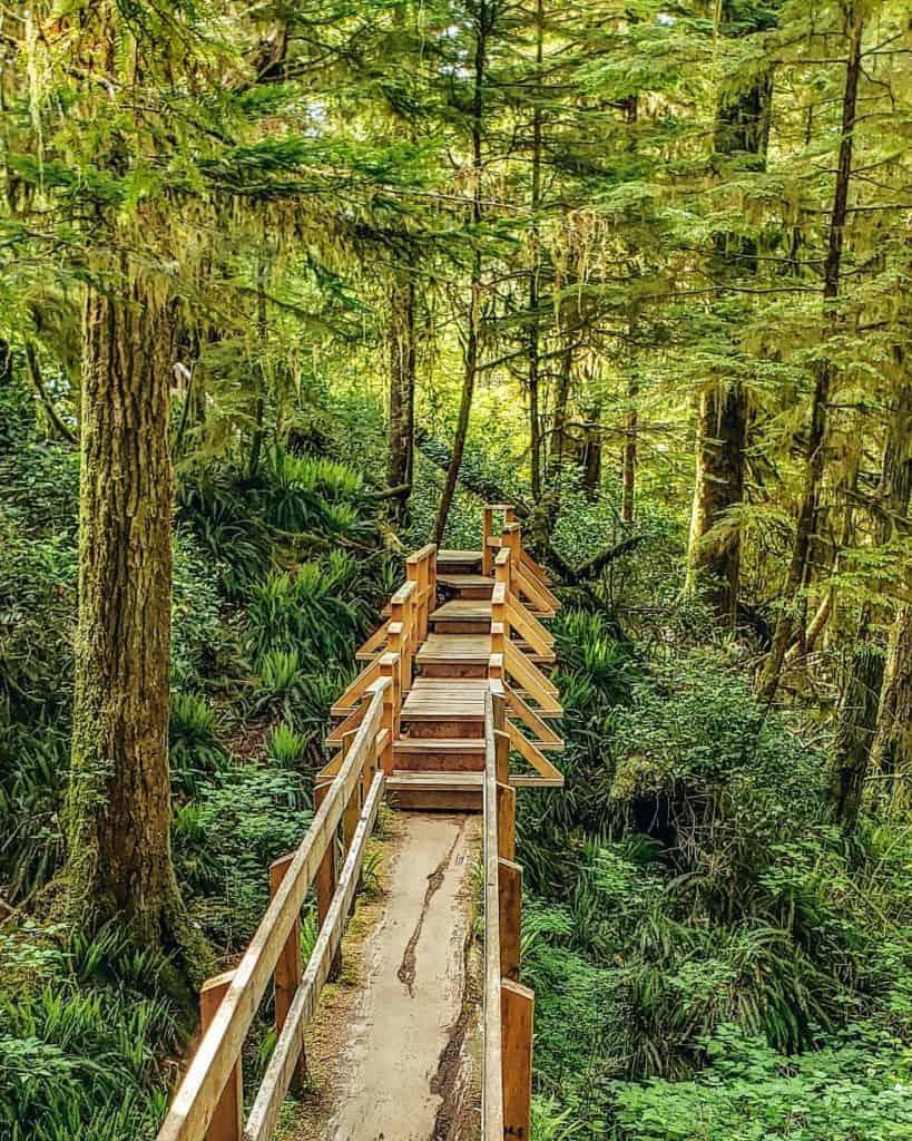 Pacific rim rainforest trail
